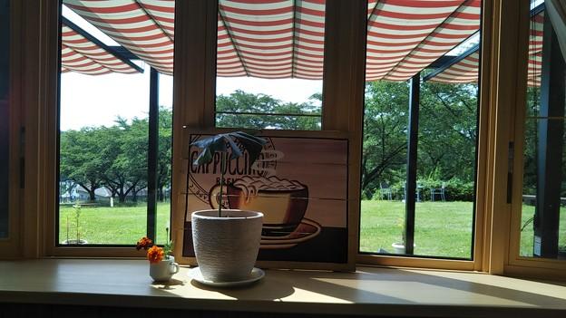 東松山農林公園のカフェのいい感じの窓からの景色