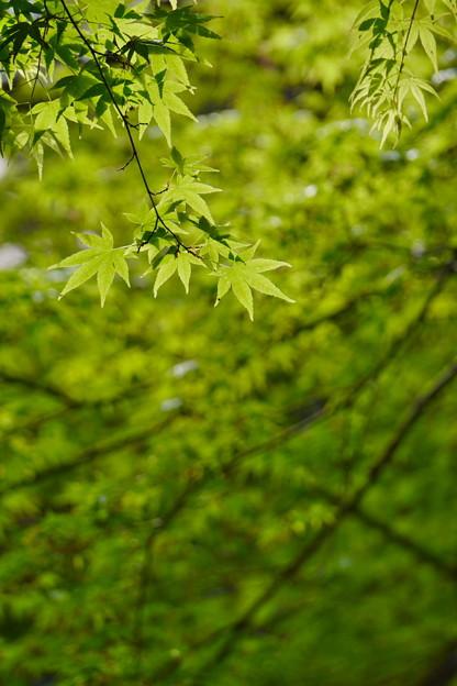 新緑 (3)
