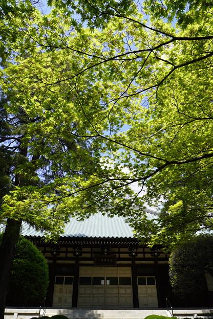 進緑 (7)