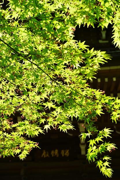 進緑 (8)