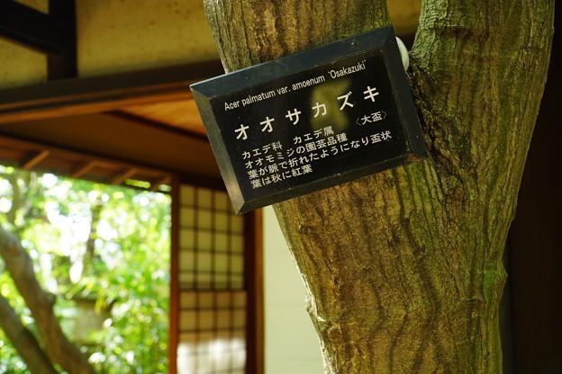 新宿 (73)