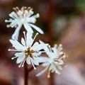 Photos: 元気な雄蕊の両性花(雌蕊の少ない両性花)