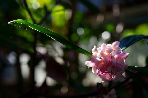 Photos: 緑陰の輝き
