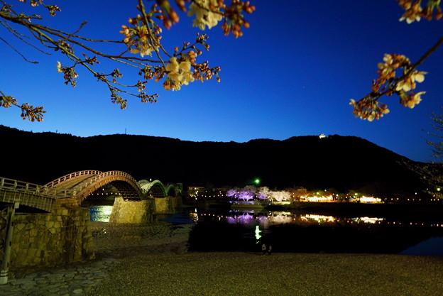 夜桜錦帯橋