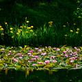 Photos: 彩りの池