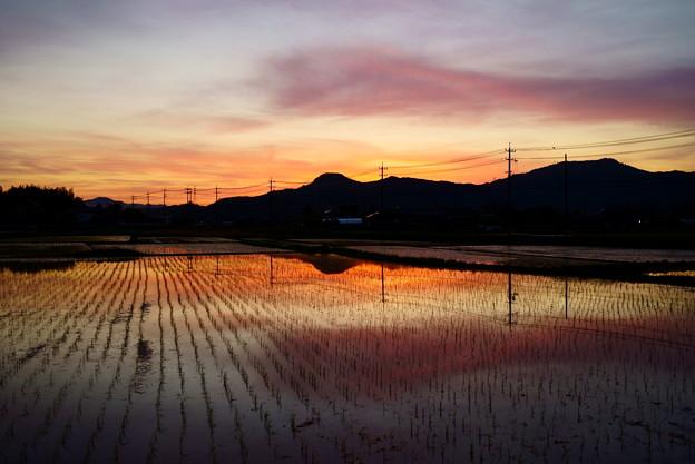 黄昏の田園風景