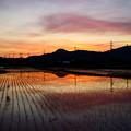 Photos: 黄昏の田園風景