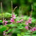 Photos: こんなの咲いてます