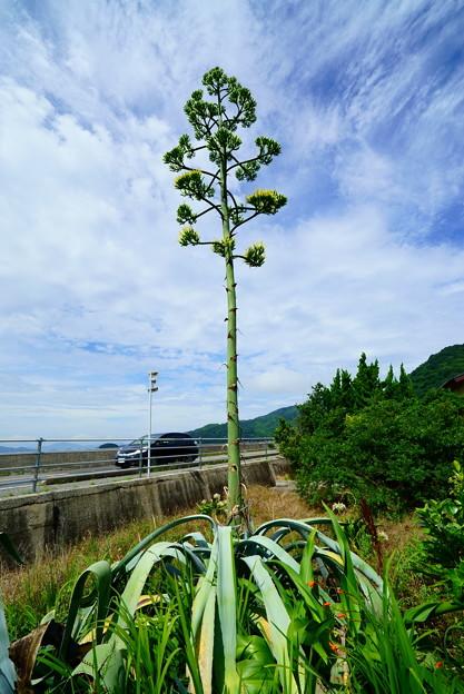 この木なんの木 気になる 気になるって 木なの?