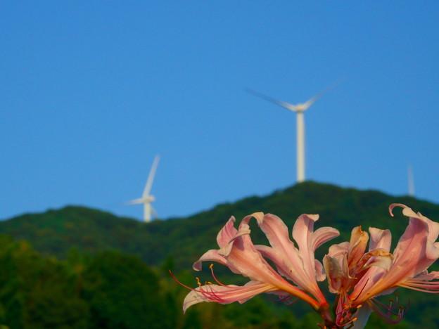 Photos: 風車を見上げながら