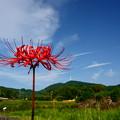 Photos: 風車を見上げて