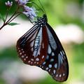 マーキング蝶 2