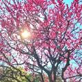 Photos: 春の日差し