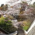 Photos: 奈良 長谷寺