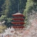 Photo: 長谷寺 五重塔