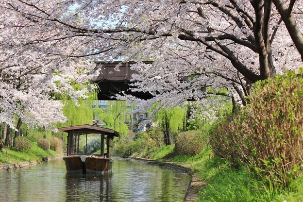 京都伏見 十石舟