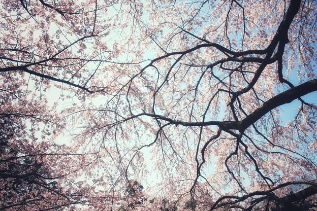 溢れる春の香り