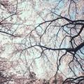 Photos: 溢れる春の香り