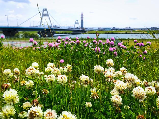 淀川 春景色