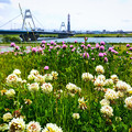 Photos: 淀川 春景色