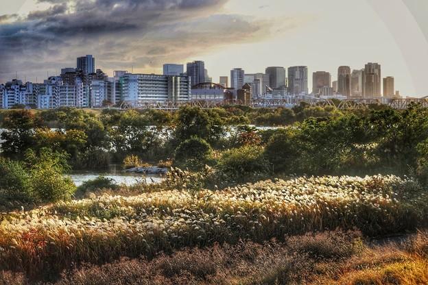 都会とジャングル
