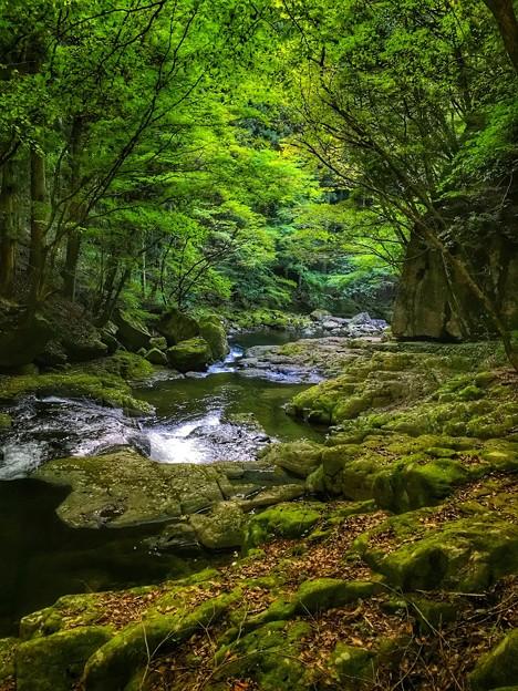 苔むす渓流