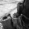 朽ちていく木