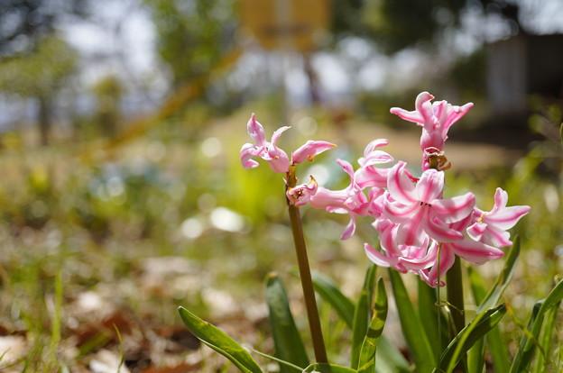 なんの花…2