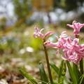 Photos: なんの花…2