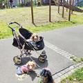 Photos: GWに近くの公園に行ってみた