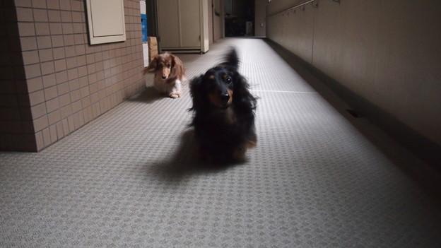 外は雨、玄関前を歩くアローとモニカ