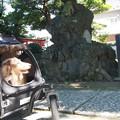 八幡神社で一休み