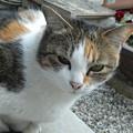 Photos: ミケママ0306