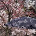 Photos: 花影の小径