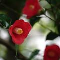 Photos: 今の季節に咲く花?