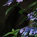 Photos: 雨を待つ花