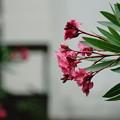 Photos: 夏に向かう花