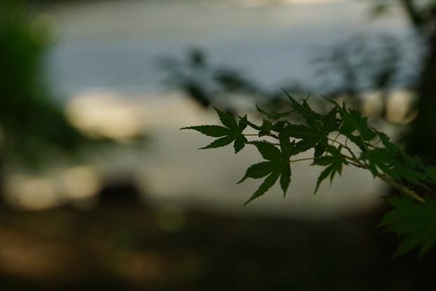 Photos: 緑の木陰
