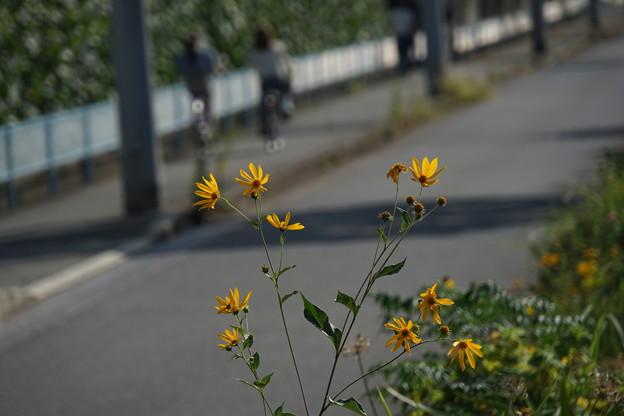秋の日の帰り道