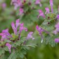 Photos: 綺麗な色の雑草