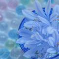梅雨の花遊び  NO1