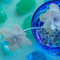 梅雨の花遊び  NO2