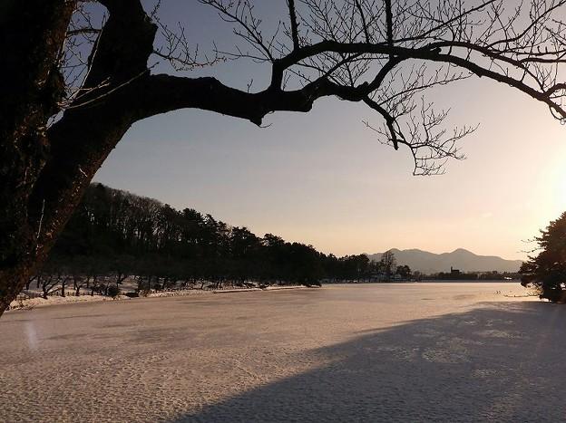 Photos: 高松の池 (6)