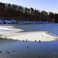 Photos: 高松の池 (5)