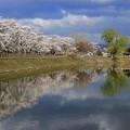 高松の池 (7)