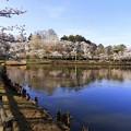 高松の池 (4)