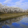 高松の池 (1)