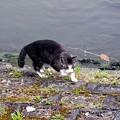 池のネコ達 (1)