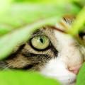 池のネコ達 (3)
