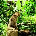池のネコ達 (4)